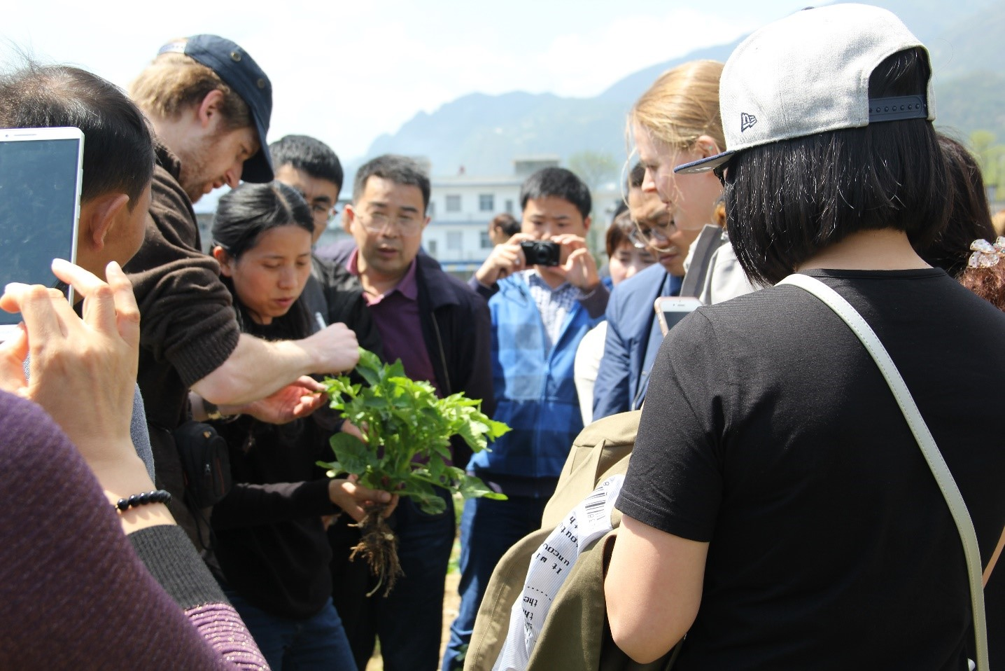 Fieldwork potato Wuxi Carah China 2